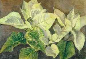 Weihnachtsstern (Euphorbia pulcherrima), Farbstifte über Aquarell