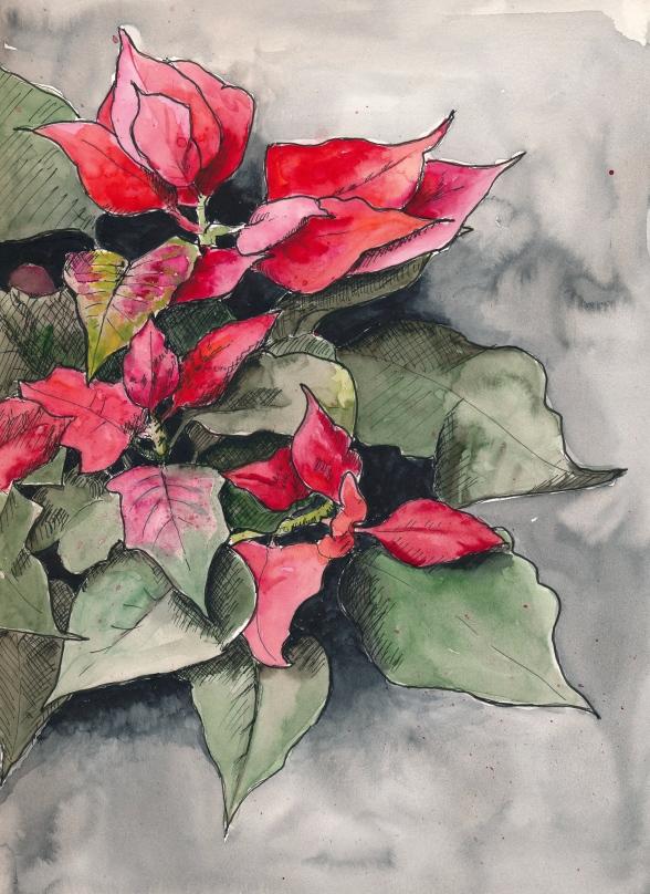 Weihnachtsstern (Poinsettia). PITT Artist Pen und Wasserfarbe in Stillman&Birn Zeta.