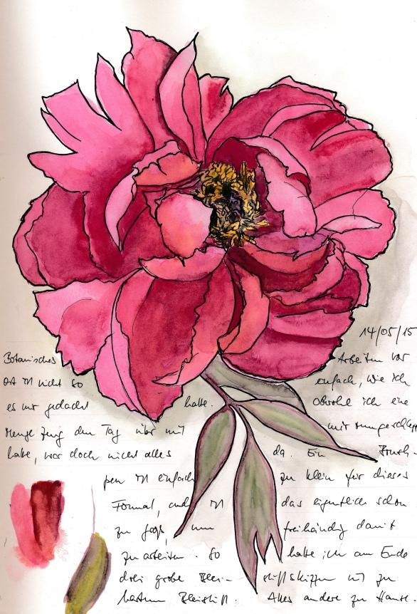 Strauchpäonie (Peonia suffriticosa) im Schweriner Burggarten. Aquarell (White Nights) und Marker in S&B Zeta.