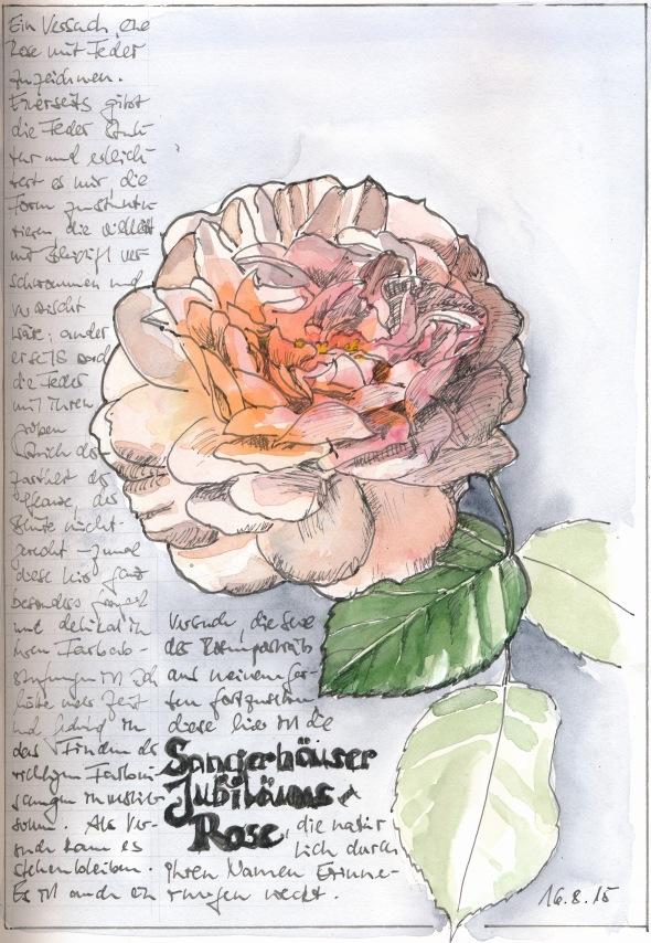 Sängerhäuser Jubiläumsrose, Federzeichnung mit Wasserfarbe in S&B Zeta.